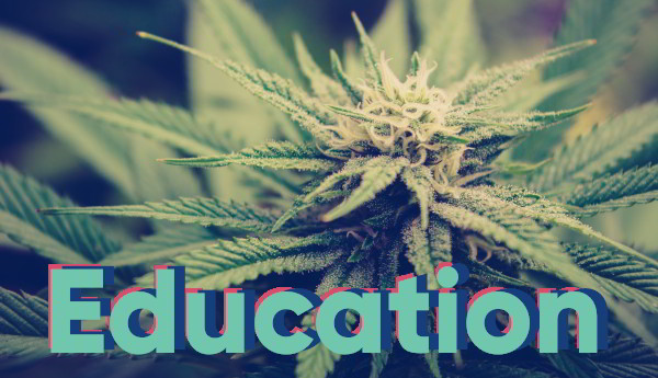 cannabis education pages